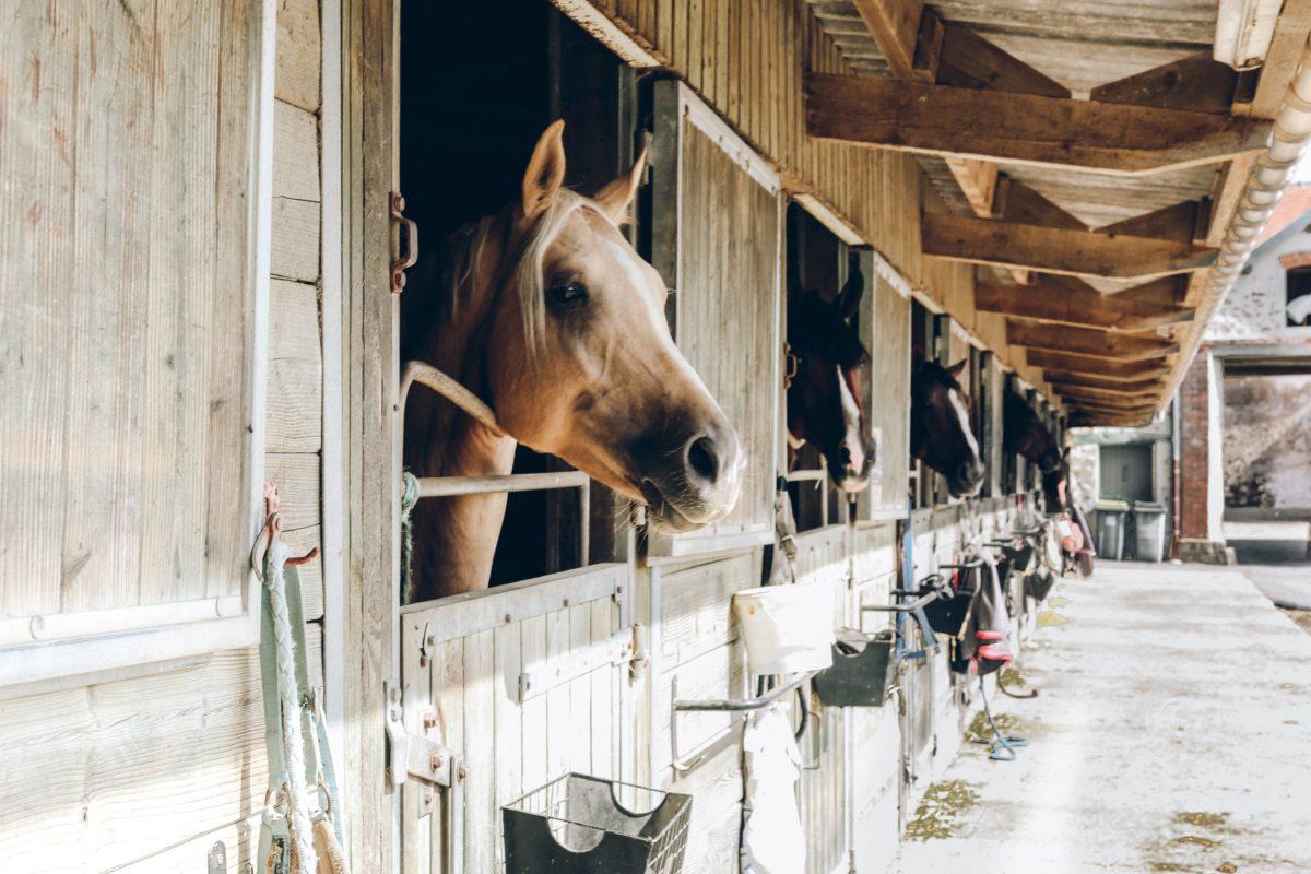 Centres Équestres